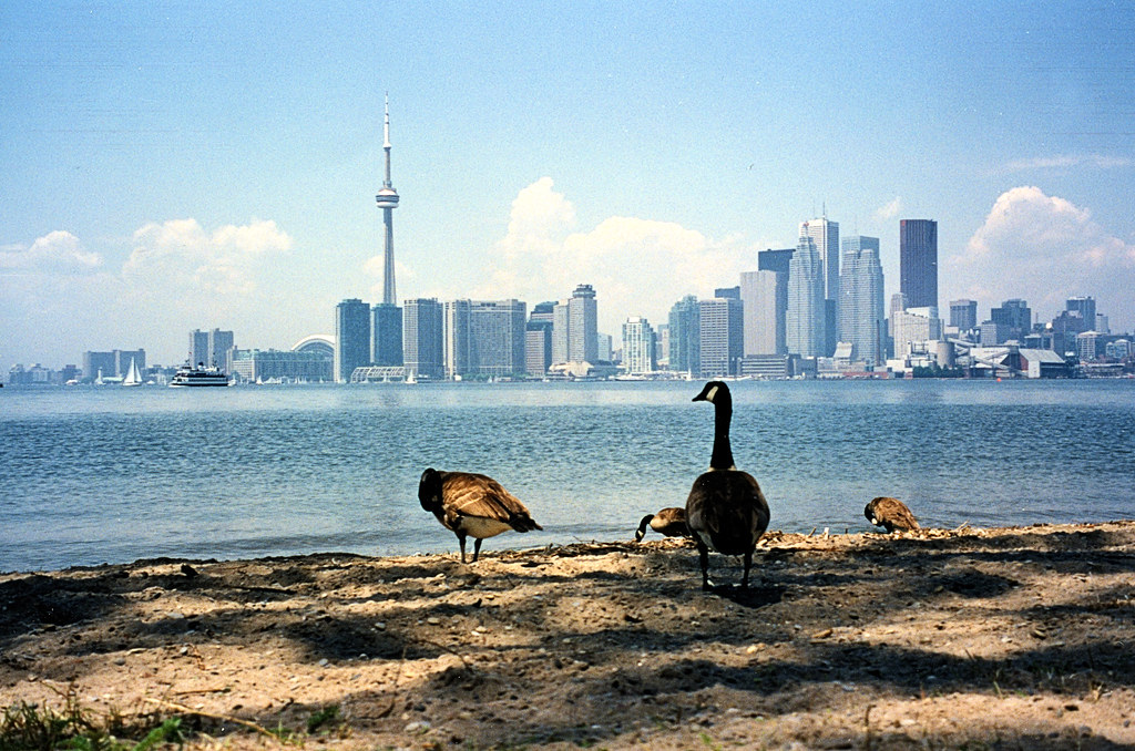 Goose's eye view of Toronto
