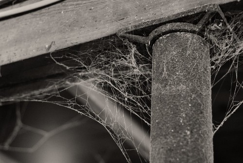 Cobweb by pmarkham on Flickr Creative Commons