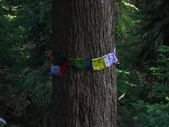 Prayer Tree?