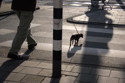 27_decembre_2008_petit_chien_1227