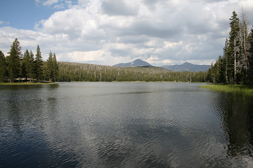 Dog Lake View