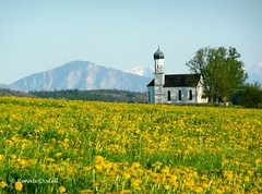 Idylle (dorena-wm) Tags: sky mountain alps tree church berg yellow bayern bavaria meadow wiese kirche himmel dandelion gelb alpen baum oberland lwenzahn jochberg thegalaxy standreas pfaffenwinkel etting dorenawm ringexcellence andreaskircherl dblringexcellence