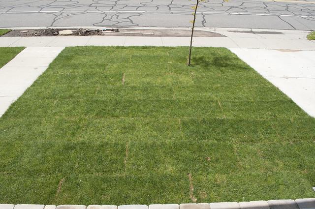 bungalow.yard.1041