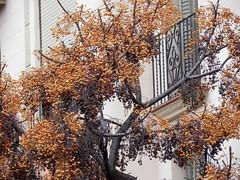 V (Flavio Valsani) Tags: barcelona catalunya estremità granviadescortscatalanes