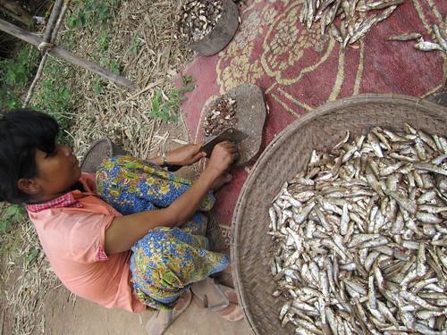 Preparing the fish catch