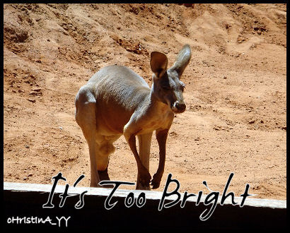 Kangaroo: It's Too Bright