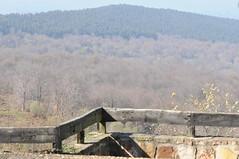 DSC_3037 (depu1056) Tags: espaa paisajes flores spain barca flor perro bosque cielo rbol vistas montaa cantabria ermita sanbernardo sanvicentedelabarquera montecorona