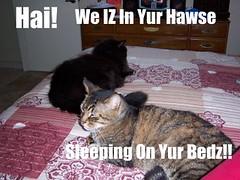 a+LOL+Cats