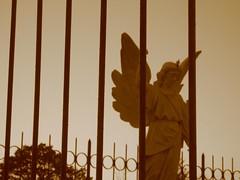 80/366 - 20 Mar [Caged angel]