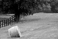 Roll Near Fence (raisinsawdust - (aka: tennphoto)) Tags: bw tree field fence nikon farm tennessee pasture barrier boundary fenceline ruralamerica haybail hayroll d80 mywinners nikond80 noididnottresspass