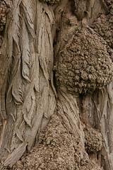 Amazing tree bark (kasia-aus) Tags: tree amazing australia bark canberra act commonwealthpark