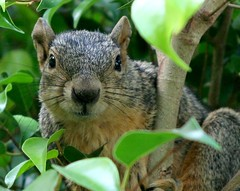 2/12 (photocatt) Tags: cute squirrel squirrels mothernature