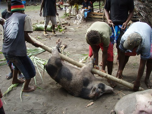 One of the pigs that was killed at the ceremony