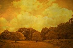 Dutch Scenery (siebe ) Tags: holland texture dutch landscape scenery nederland thenetherlands heemstede landschap leyduin vinkenduin aplusphoto hollandstock
