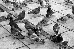 Mrzstrae Wien  7 (dugspr  Home for Good) Tags: vienna wien bw austria sterreich 2007 neuermarkt naturhistorischesmuseum neubaugasse minoritenplatz neustiftamwalde naglergasse wienbw unlimitedphotos mariahilferstrase mrzstrase mariatheresianplatz