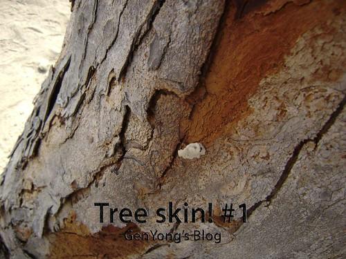 Tree Skin #1