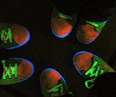 Glow Bowling at Midnight