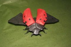 Flying lady beetle (PhillipWest) Tags: lady insect origami beetle ladybug paperfolding papiroflexia tissuepaper robertlang robertjlang moriki ladybeelte