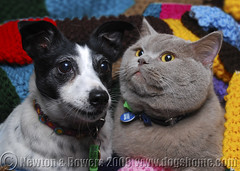 Lulu & Chester (The Lost Dogs' Home) Tags: rescue dog pet cats pets cute dogs animal animals cat lost student feline australia melbourne canine victoria stray newhome doggy shelter adopted ldh lostcat lostdog rehomed adoption rmit strays nonprofit northmelbourne dogcat animalshelter lostdogs rescuedog britishblue animalwelfare rescuepet rescueanimal rehome britishbluecat thelostdogshome flickrdogsandcats lostdogshome lostdogthelostdogshome