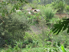 House and Garden near Kainantu (kahunapulej) Tags: papuanewguinea png niugini ehp easternhighlandsprovince kainantu kahunapule kahunapulej