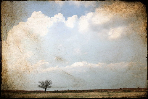 Lone tree, 1 image series a