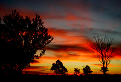 sunset (deekirby10) Tags: trees sunset red sky yellow colourful naturesbest amazingcolors bestpic wonderfulworld ultimateshot sparklingheart colourartaward shotofthemonth thesuncard ourmasterpieces fenomeninaturali naturescreations naturesgreenstar faceinthecloudsbeautifulclouds