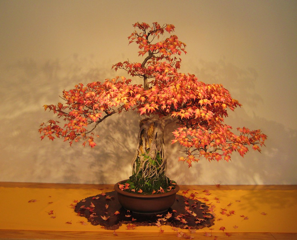 Halloween bonsai.