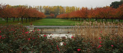 Cherry Esplanade, Brooklyn Botanic Garden