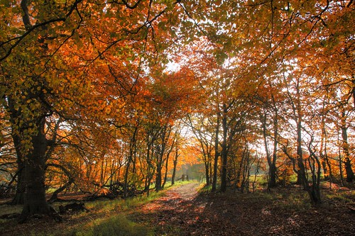 Wytham Woods in autumn
