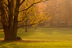Under The Tree (Philipp Klinger Photography) Tags: park autumn light sunset shadow people tree fall grass germany deutschland evening leaf europa europe sitting afternoon shadows hessen frankfurt under leafs philipp hesse klinger underthetree aplusphoto infinestyle dcdead vosplusbellesphotos