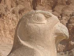 2008.10.11 055 (catarina.berg) Tags: bird temple egypt falcon horus luxor