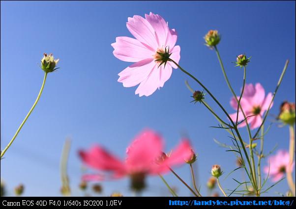 9711-新社花海:Date with Bee_103.jpg