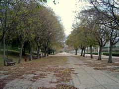 Parque Eduardo VII - Lisbon #4 (ruimssoares) Tags: park portugal lisboa lisbon parqueeduardovii marquesdepombal