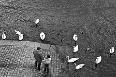 The gathering (Paul Marculescu) Tags: people bw water birds river print swan child prague pavement floating swans czechrepublic fav persons vltava humans dsc7126
