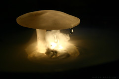 Alice In Wonderland (_David_Meister_) Tags: light macro mushroom water fog canon eos licht wasser nebel magic drop makro mystic aliceinwonderland tropfen pilz mystisch magie 400d aliceimwunderland macrophotosnolimits davidmeister