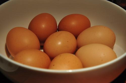 eggs' gossip