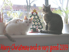 Merry Christmas (*Angel@) Tags: christmas cats card bommel doddeltje
