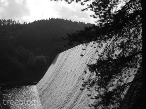 Scots pine in front of Derwent Dam
