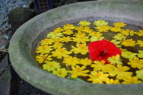 Tagaytay Bag of Beans flowers