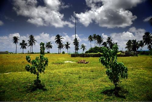 http://farm4.static.flickr.com/3219/3150428431_1a87ecf01e.jpg