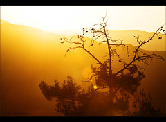 Pine forest sunset (-Filippos-) Tags: sunset orange mountains tree pine forest bare cyprus