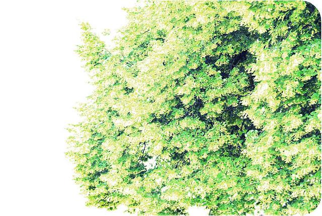 http://farm4.static.flickr.com/3219/5765595667_112f7f5332_z.jpg