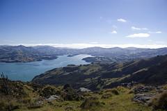 Akaroa Bay from 699m (Steph J Clarke) Tags: newzealand mountains water walking landscape bay harbour walk canterbury backpacking tramping banks tramp akaroa canterburynz penisiula