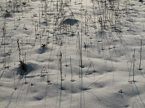 雪の大原 (52)
