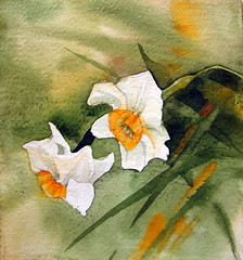 narcissus in watercolor (my paintings) Tags: new flowers flower color detail art watercolor painting persian artist iran persia iranian narcissus ssstudio aliehs alieh