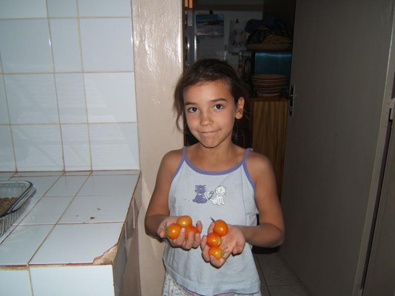 Nos premières tomates