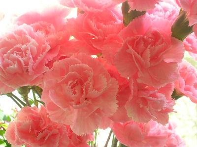 SotM flowers 08