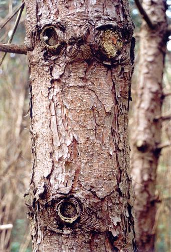 Créatures féeriques des bois 2389483055_190b2aa87d