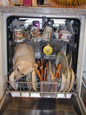 The Real Dishwasher