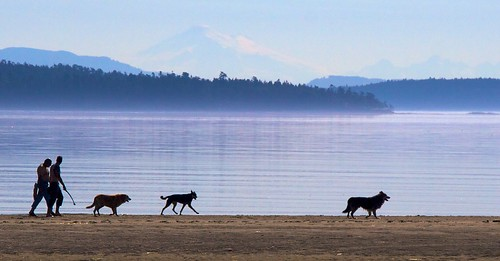 Dog-walking on Island View Beach
